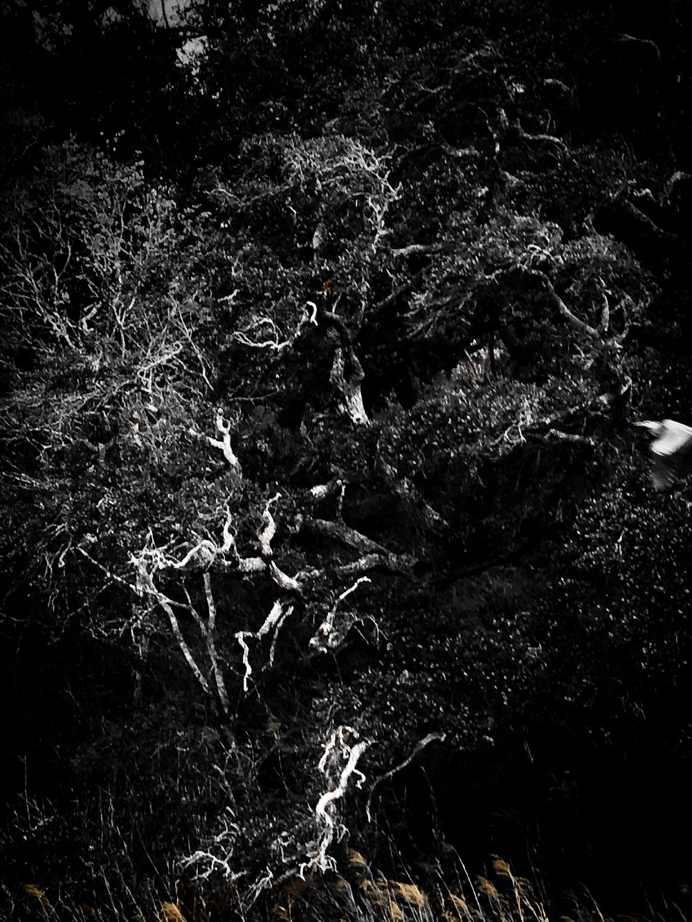 Live Oaks in BW by Adam Graser Photography.JPEG