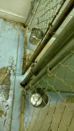 Greyhound Friends - dirty floor & empty water buckets.jpg