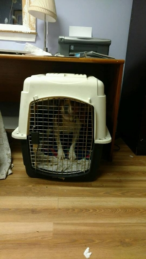 Greyhound Friends - hound too small crate.jpg