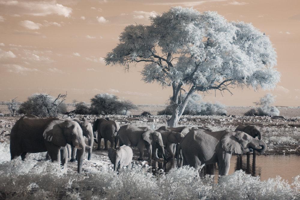 Elephants at Etosha National Park.
