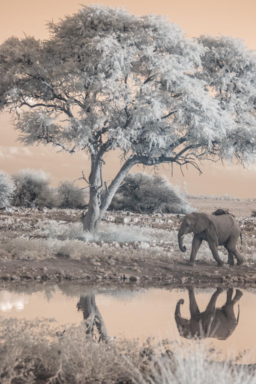 Elephant at Etosha National Park.