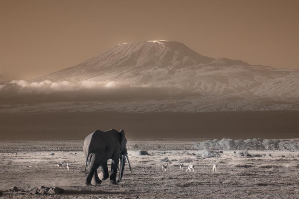 TerriGold_Kenya-13.jpg