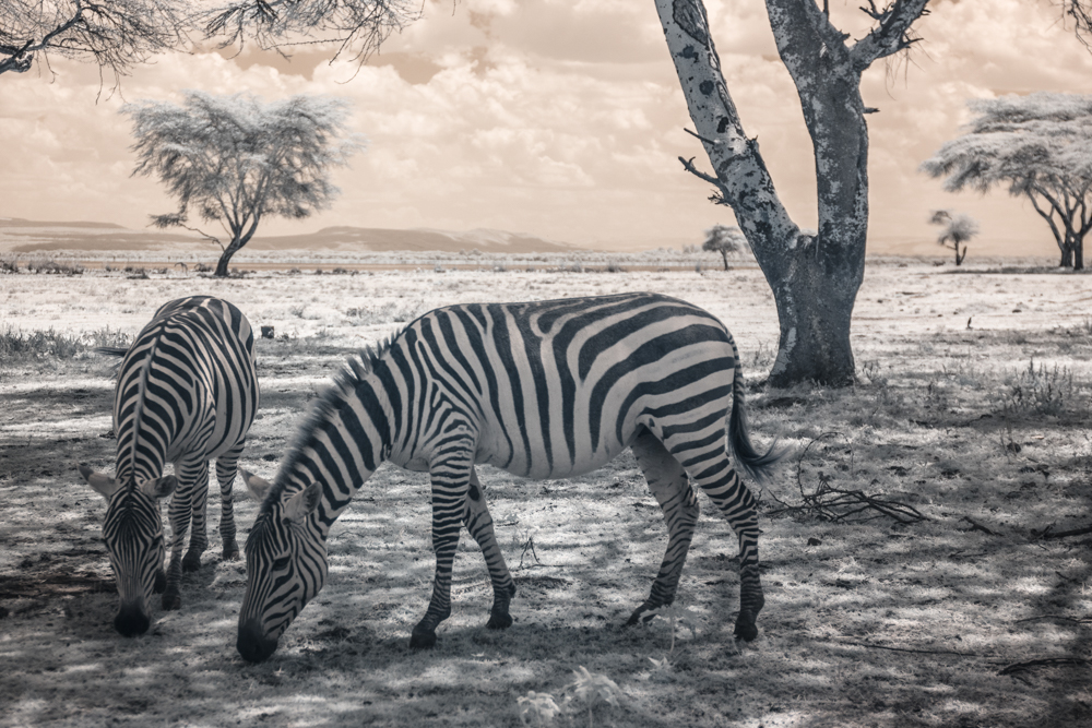 TerriGold_Kenya-18.jpg