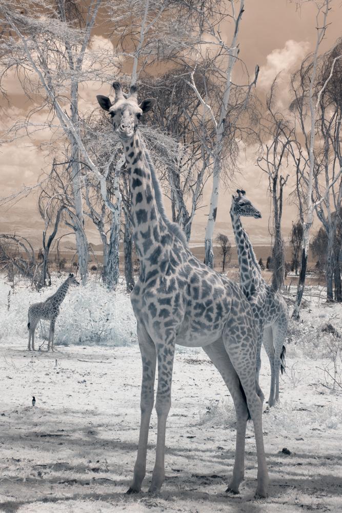 TerriGold_Kenya-19.jpg