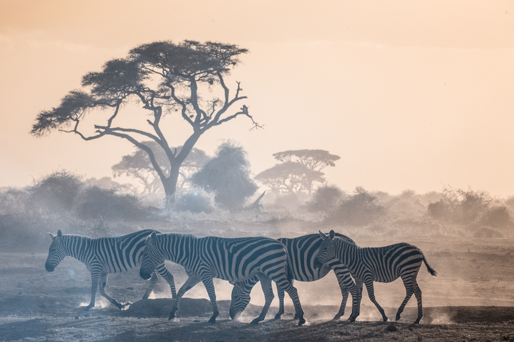 TerriGold_Kenya-21.jpg