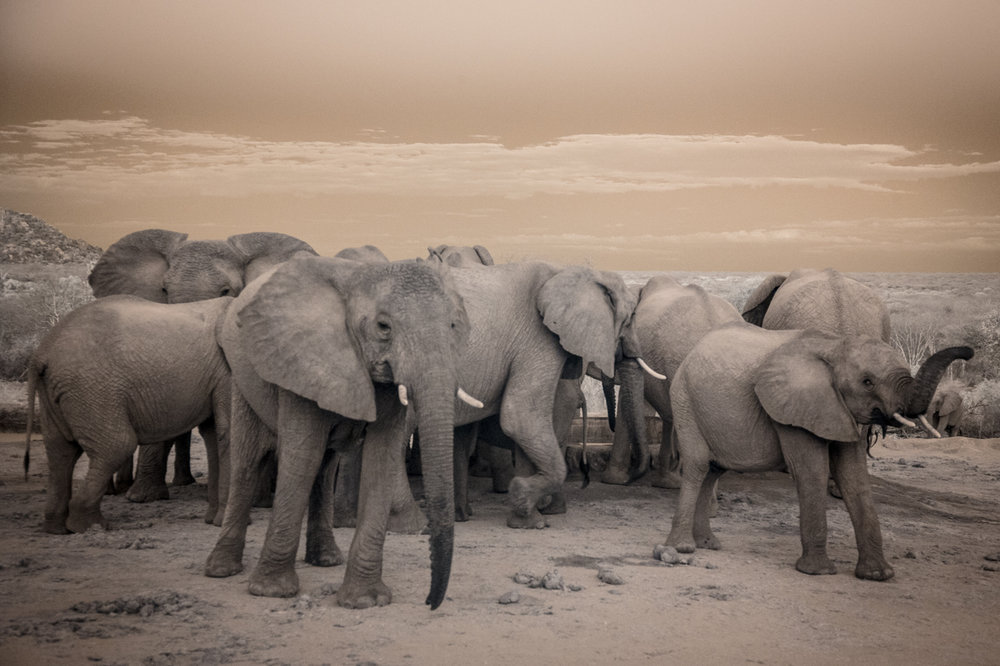 Kenya_2015_red-997-2.jpg