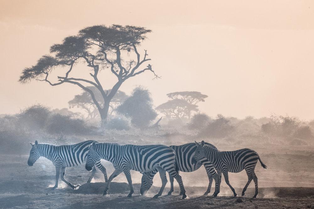 kenya_red_ambo-821-100.jpg