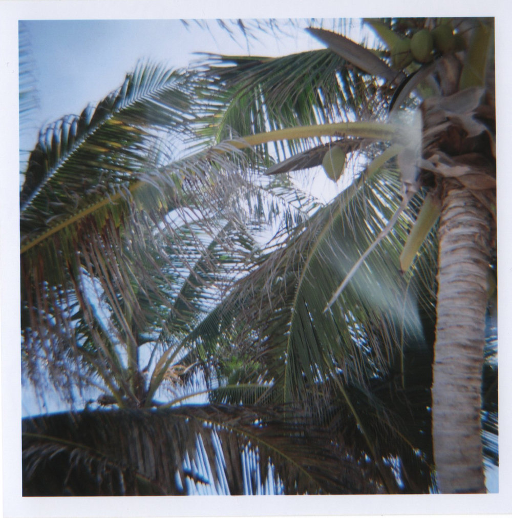 palmtrees2BBC.jpg