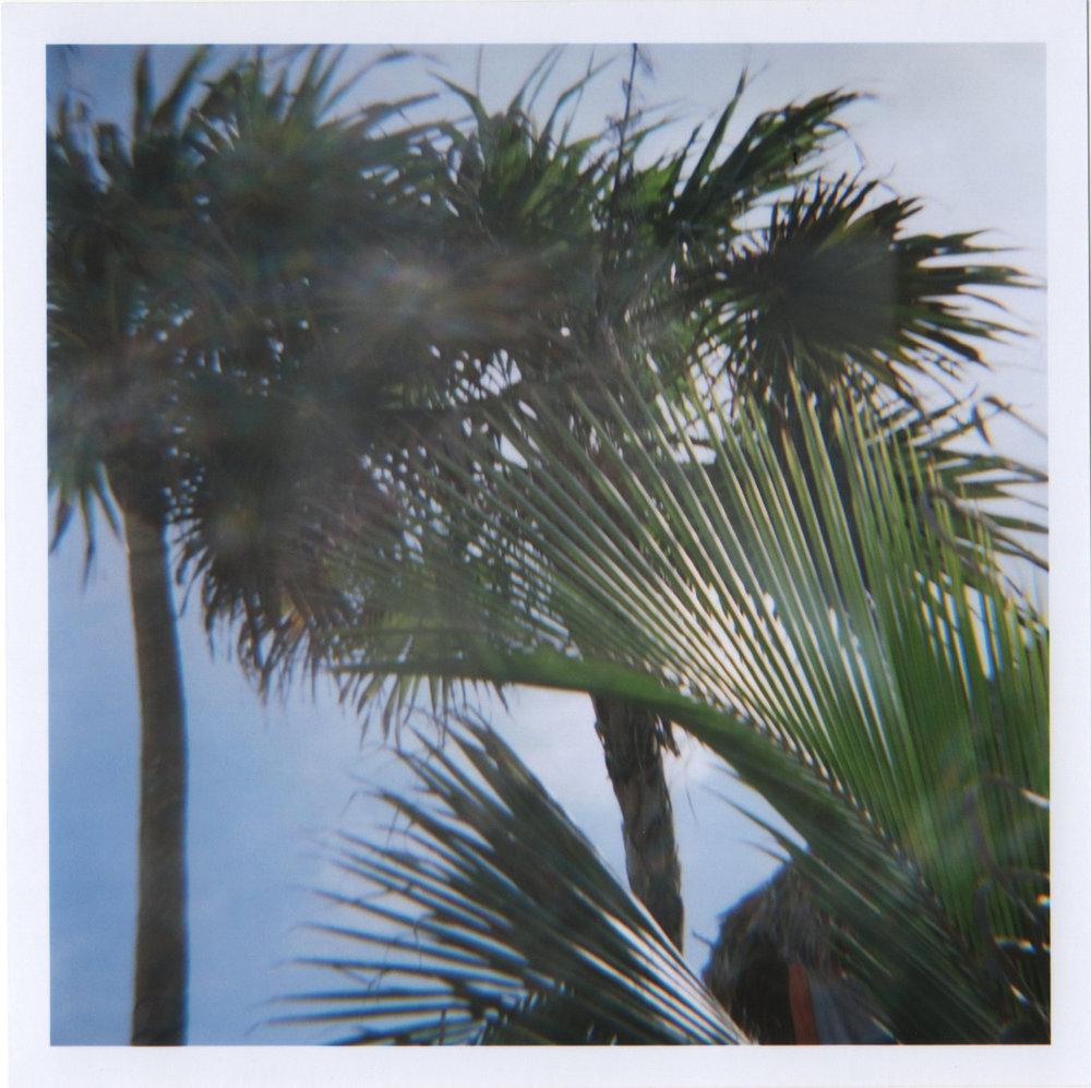 palmtreesBBC.jpg
