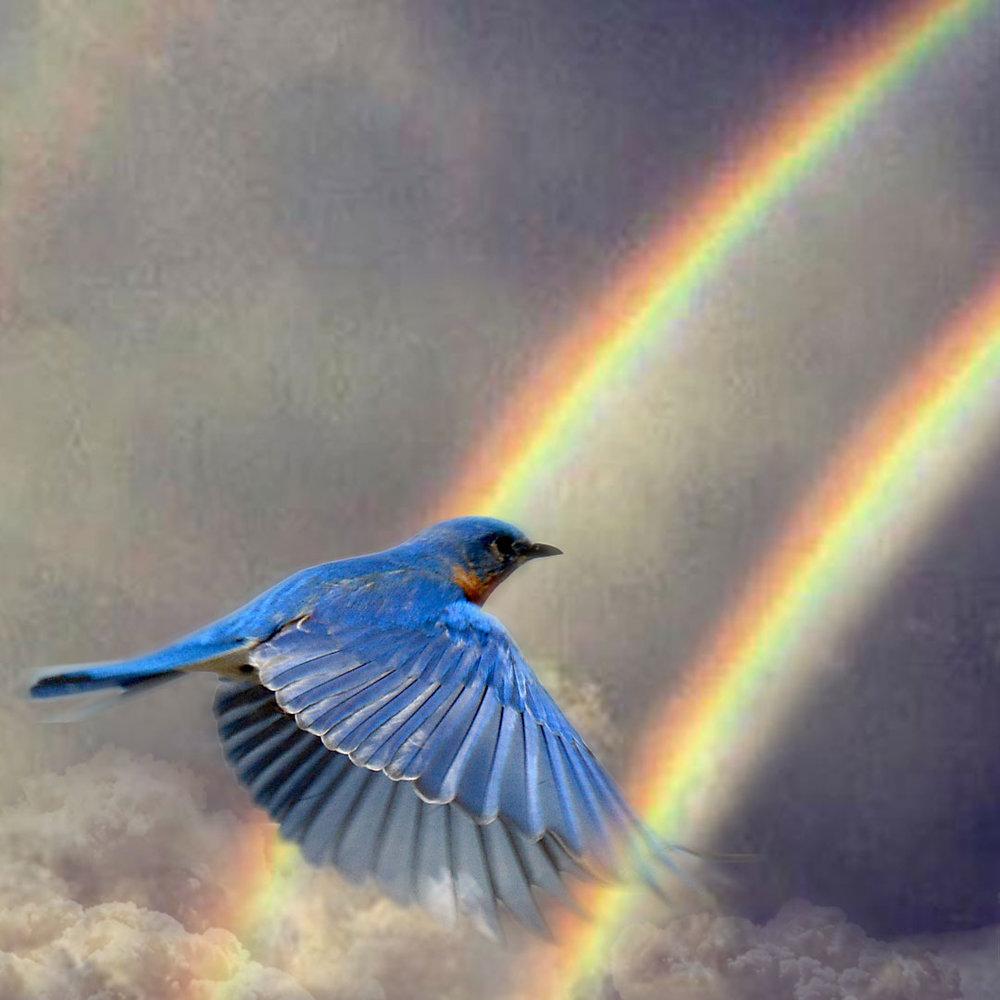 bluebird_final_v2_1080sq.jpg