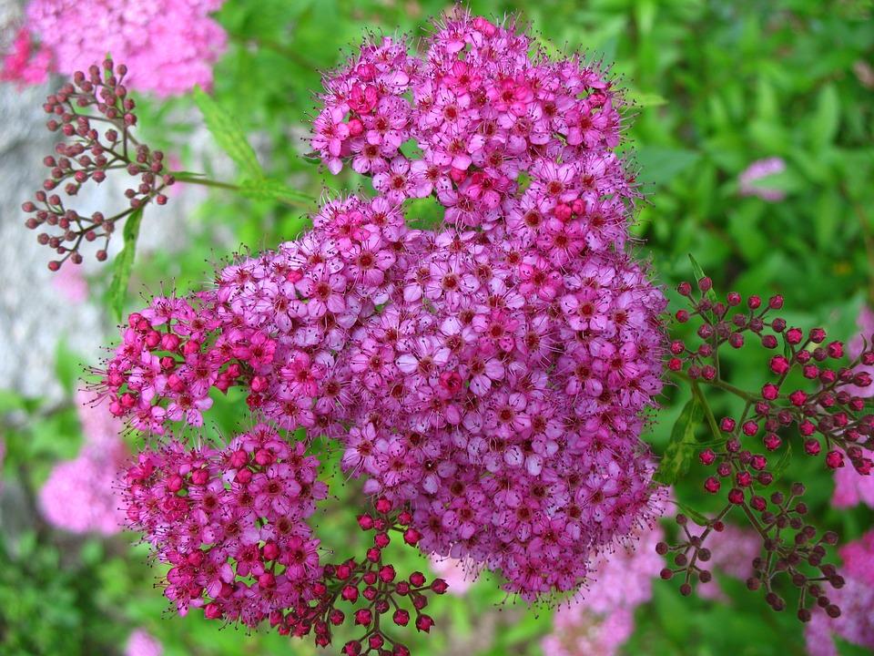 flower-1104447_960_720.jpg