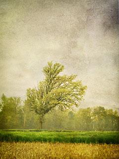forest2013.jpg