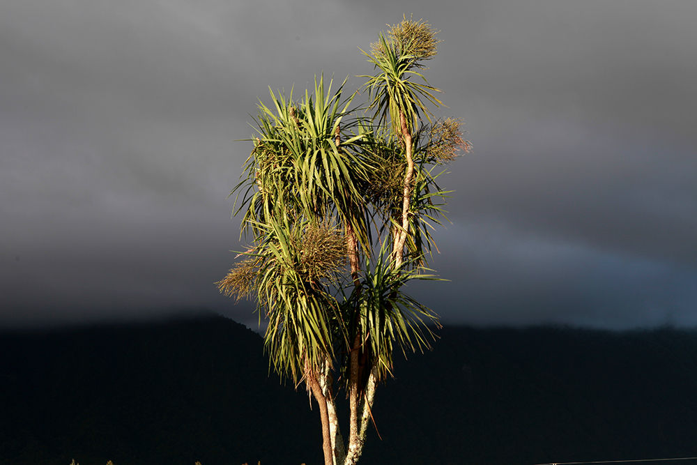 Justine Guerriat_Herbarium (Palm tree Storm).jpg