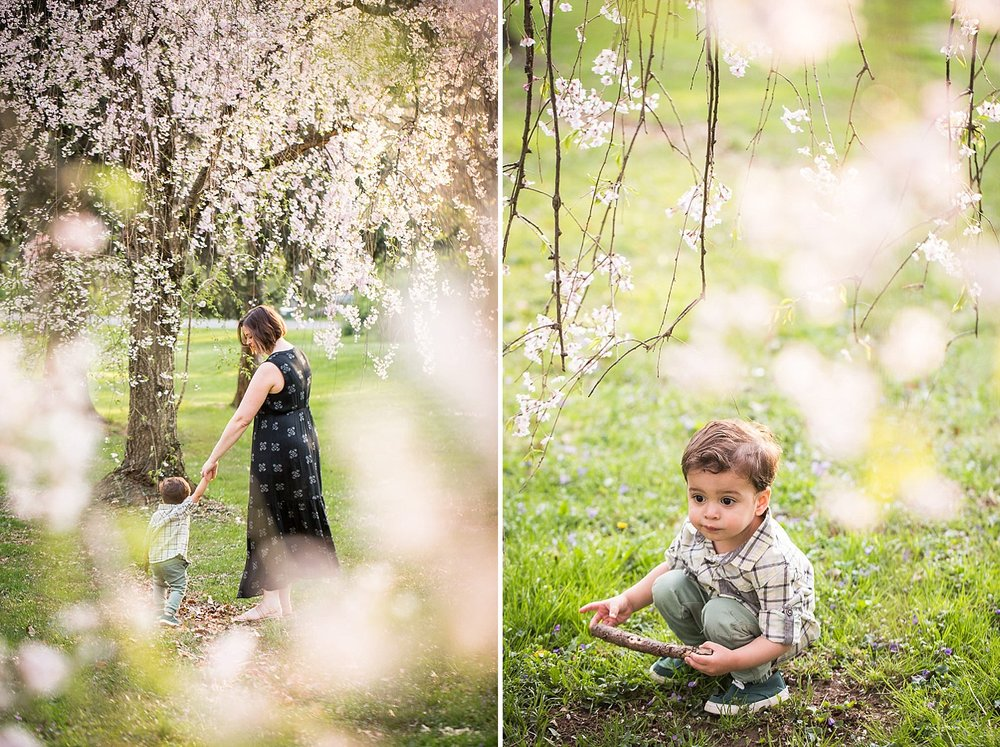 Toddler boy playing in some pink cherry tree blossoms at a park in Lancaster, PA with his mother.