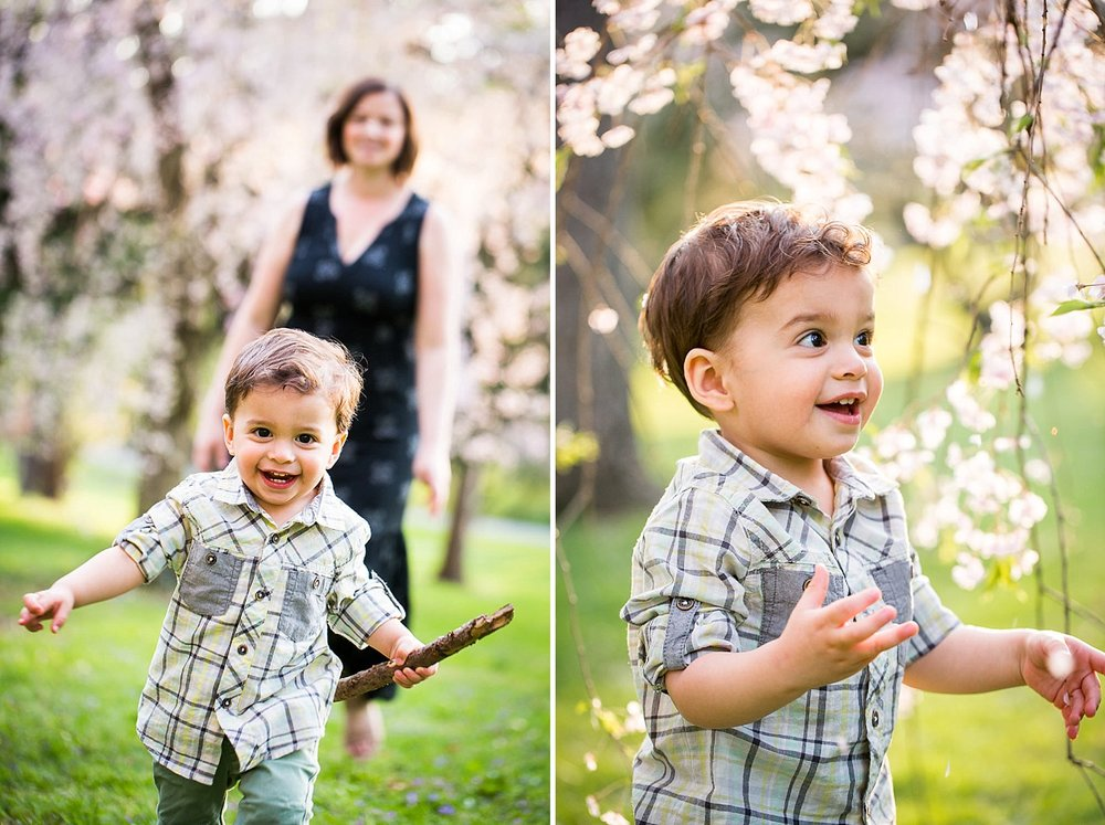 Toddler boy playing in some cherry tree blossoms at a park with his mother.