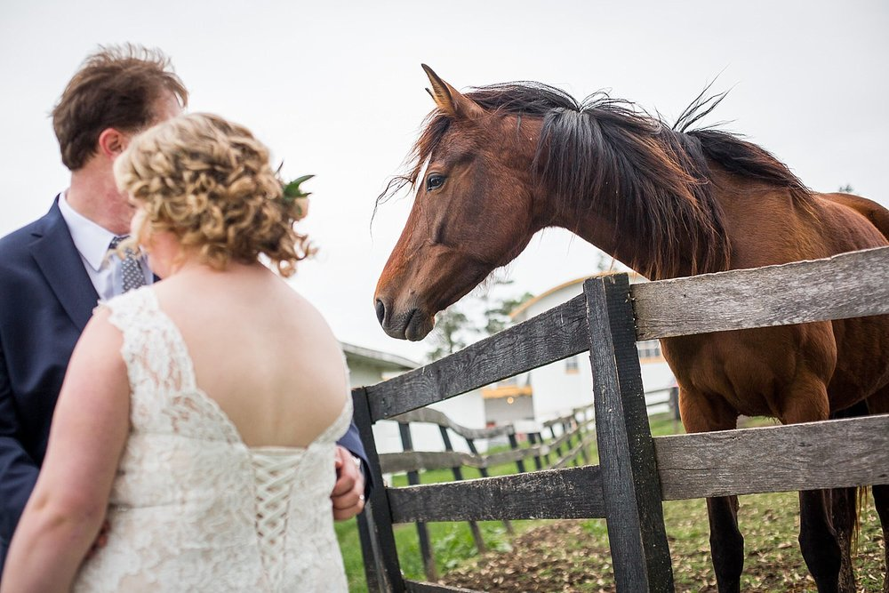 Lauxmont_Farms_wedding_horses