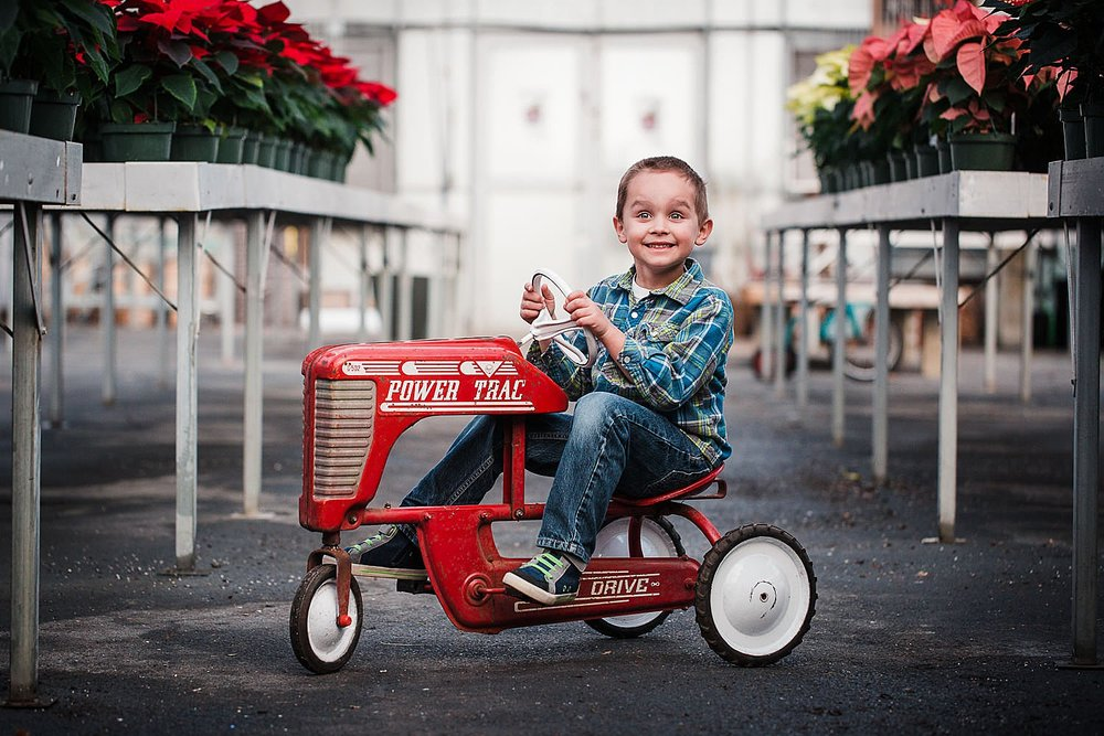 Photo of a little boy riding on a red toy tractor in a greenhouse at Christmas time.