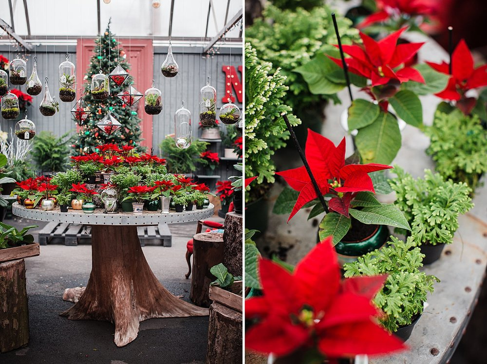 freys_greenhouse_christmas_mini_session_photography_9.jpg
