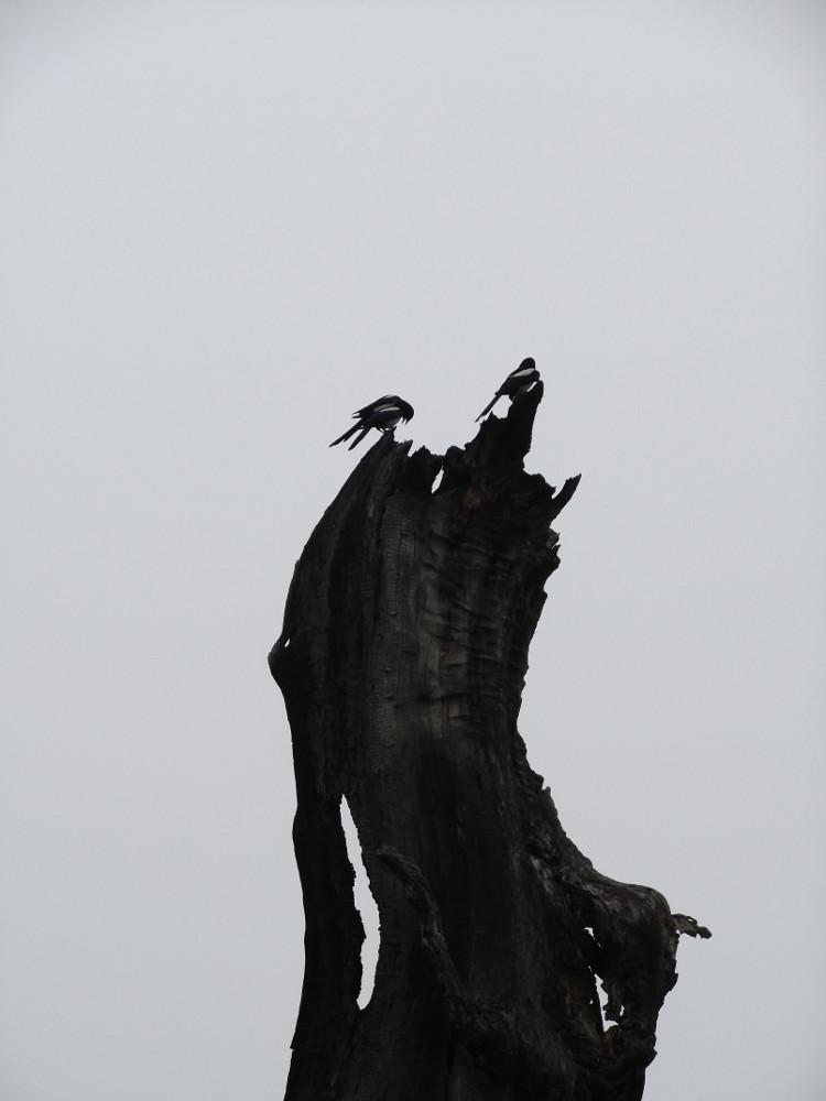 37-Birds.jpg