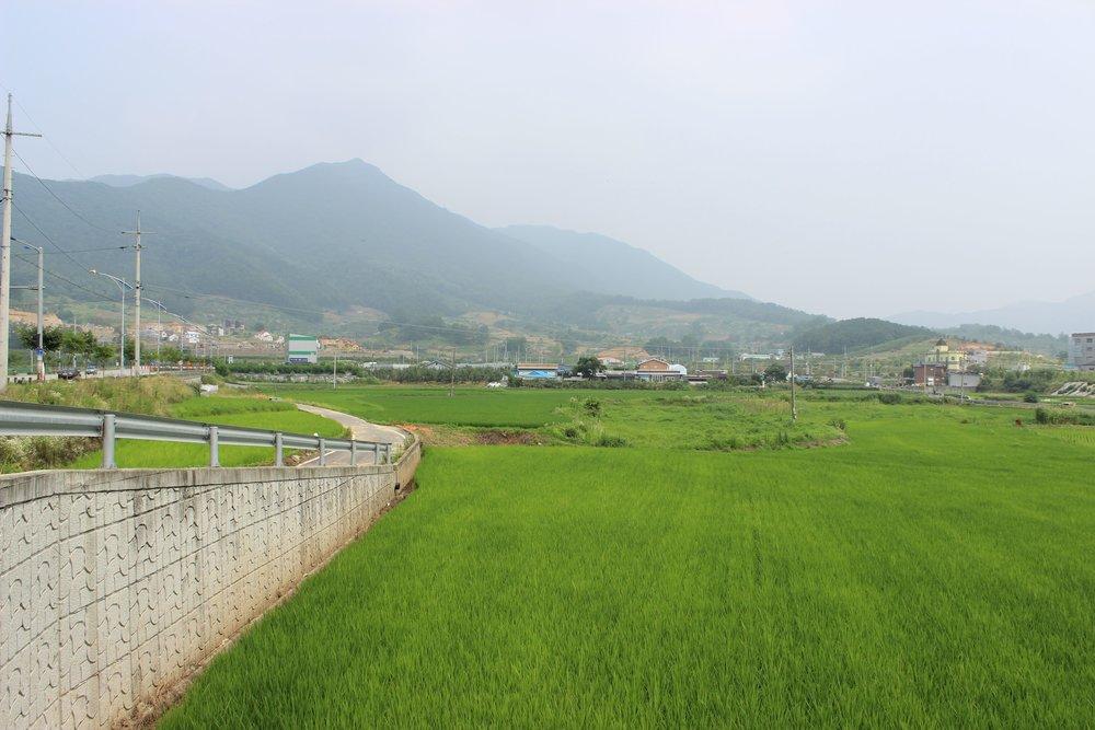 Rice-paddies-1.jpg
