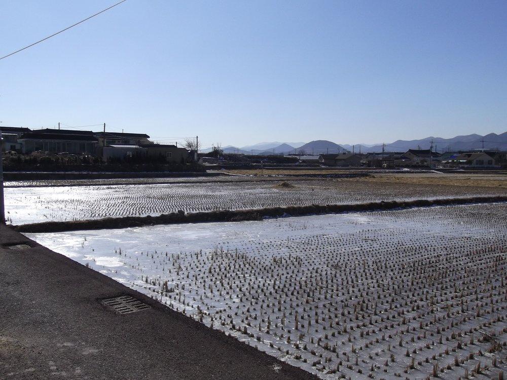Ice-covered-rice-fields.jpg