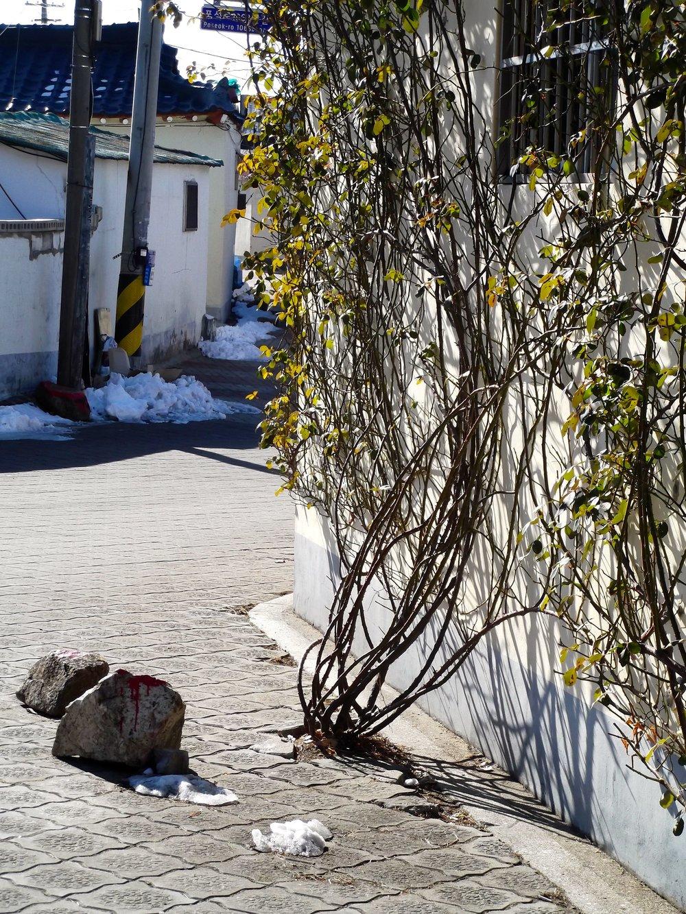 Vines-growing-from-sidewalk.jpg