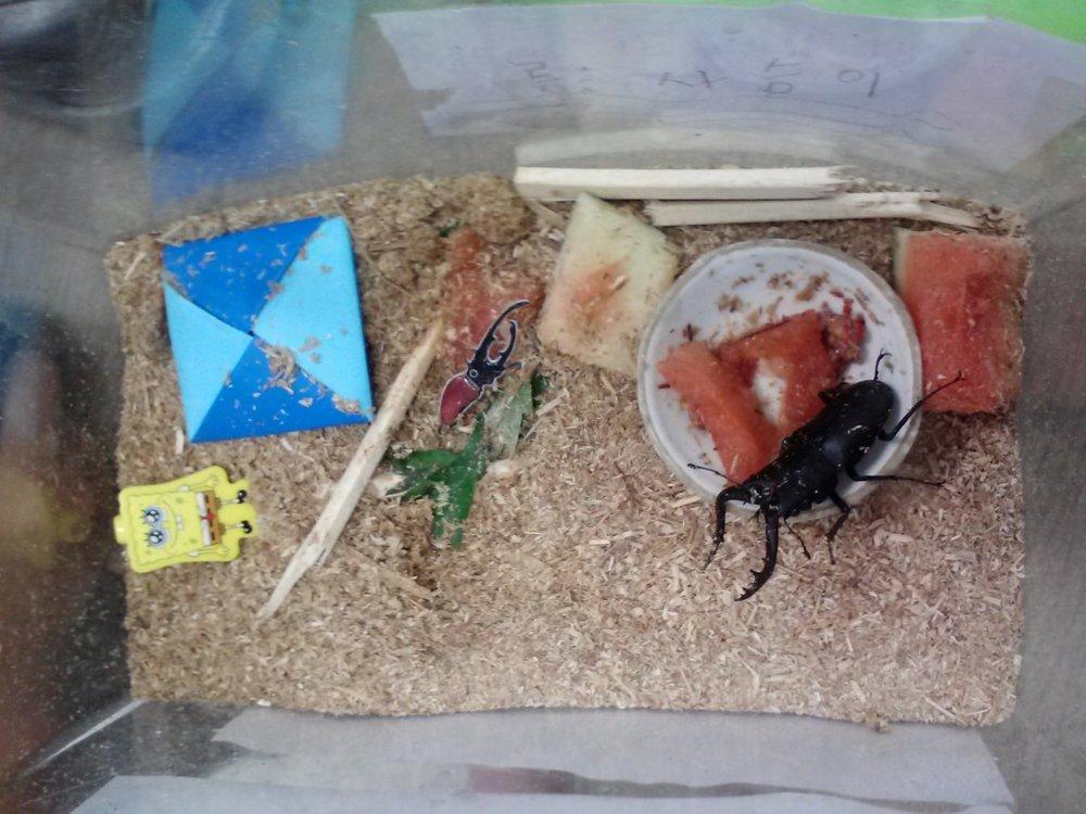 Pet-Beetle-1024x768.jpg