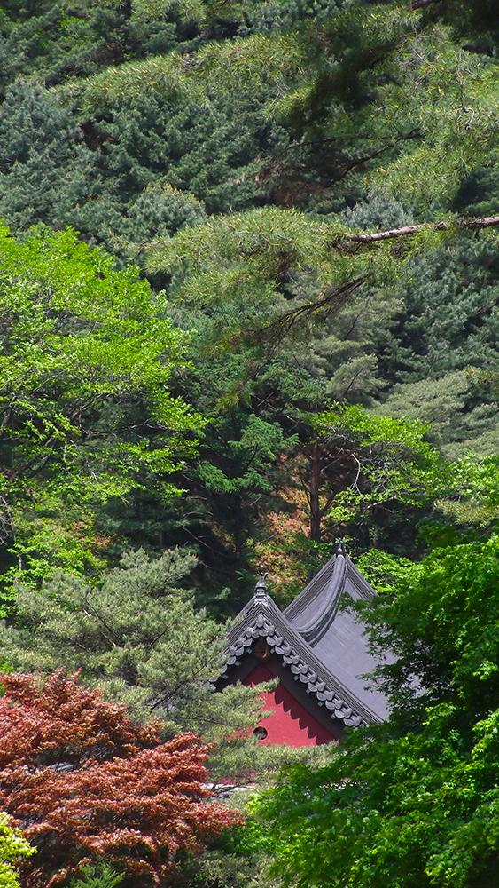 Guinsa-through-the-trees.jpg