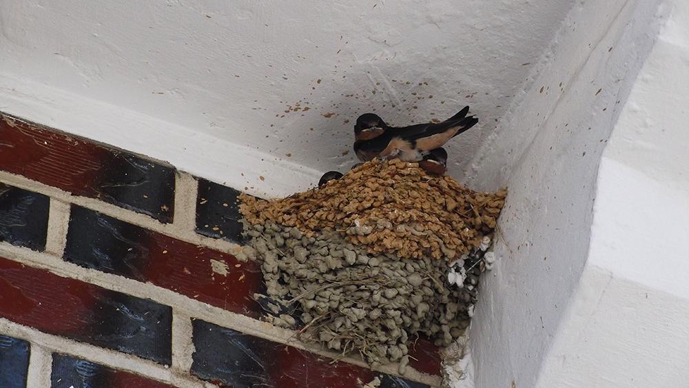 Birds-nest.jpg