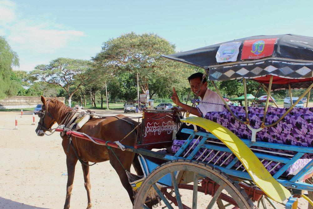 Horse-Cart.jpg