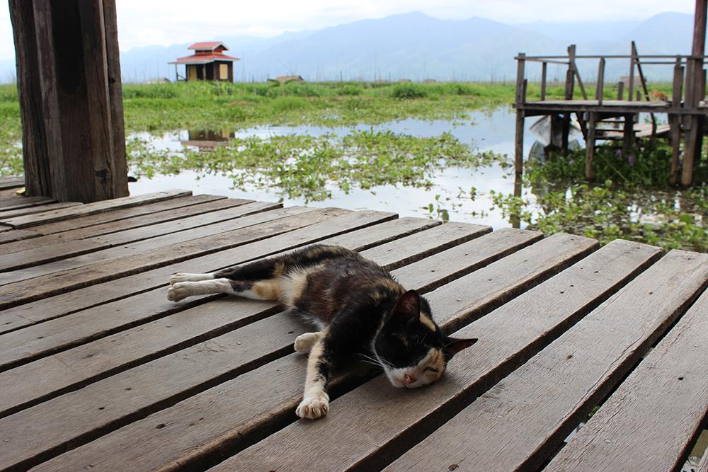 Lazy-Cat-Temple-2.jpg