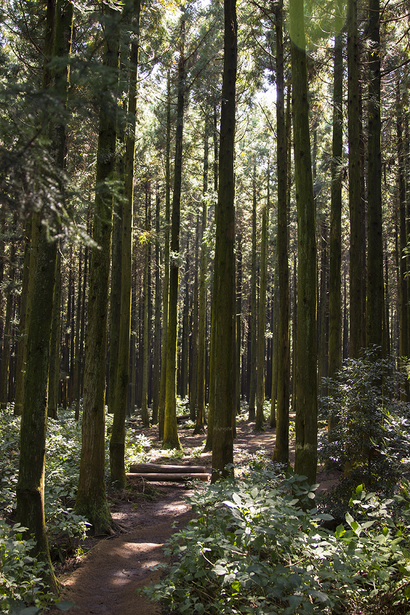 In the cedars.jpg