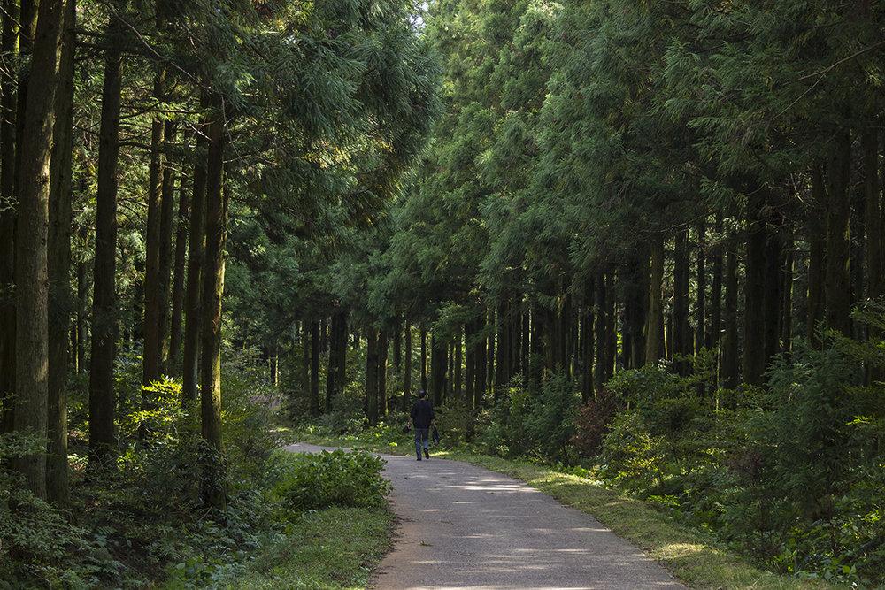 Hiker 2.jpg