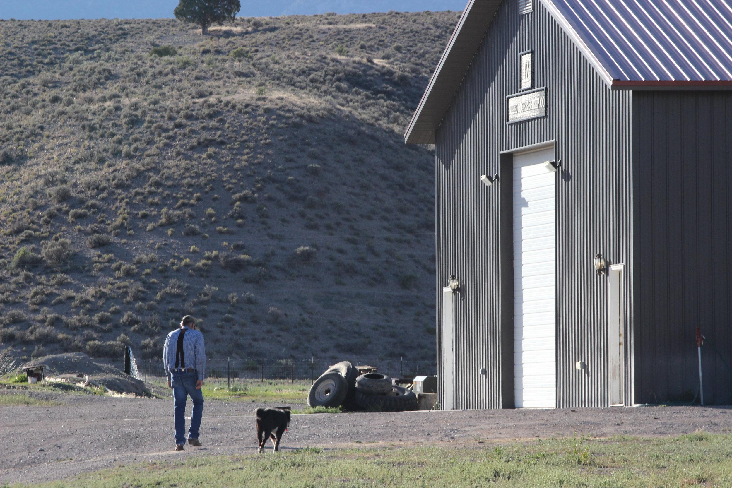 Hank Vogler, Need More Sheep Company