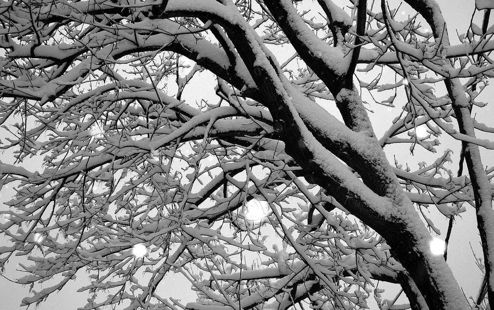 tree-13866.jpg