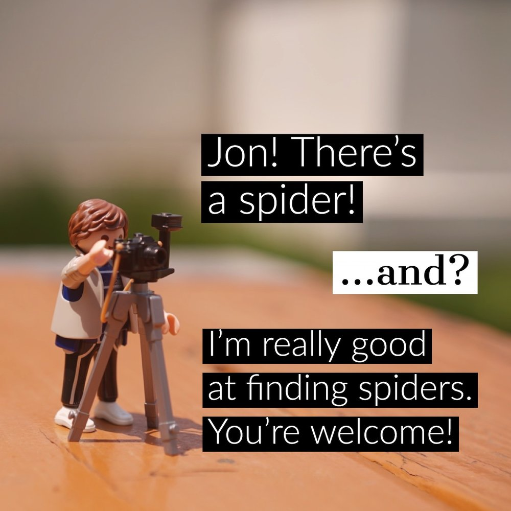 found a spider.jpg