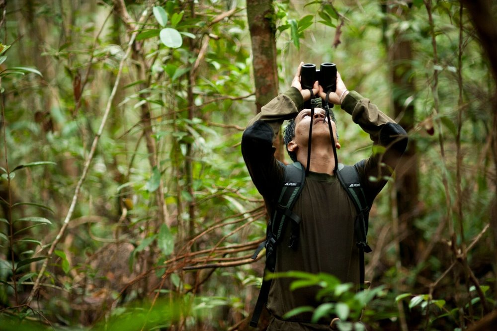 Conservation research in action. Photo by Chris Owen & Borneo Nature Foundation_preview.jpeg