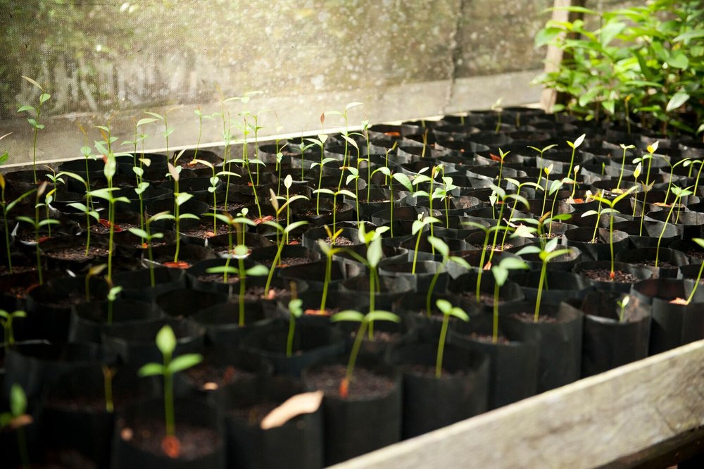 Seedling nursery. Photo by Chris Owen & Borneo Nature Foundation_preview.jpeg