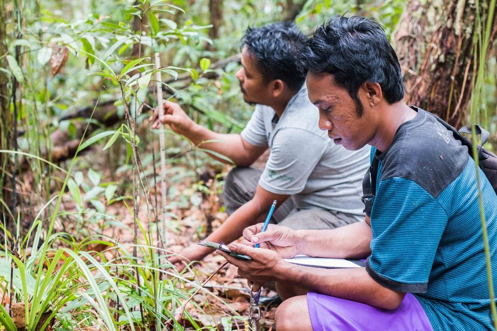 Measuring seedlings in Sabangau. Photo by Pau Brugues Sintes and Borneo Nature Foundation_preview.jpeg