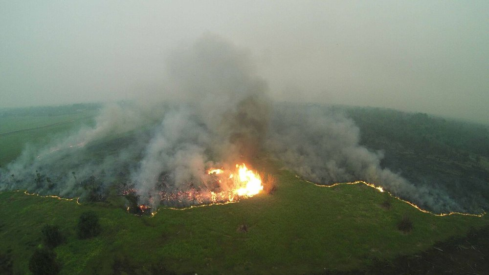 Drone footage of forest fire 2015. Photo by Borneo Nature Foundation_preview.jpeg