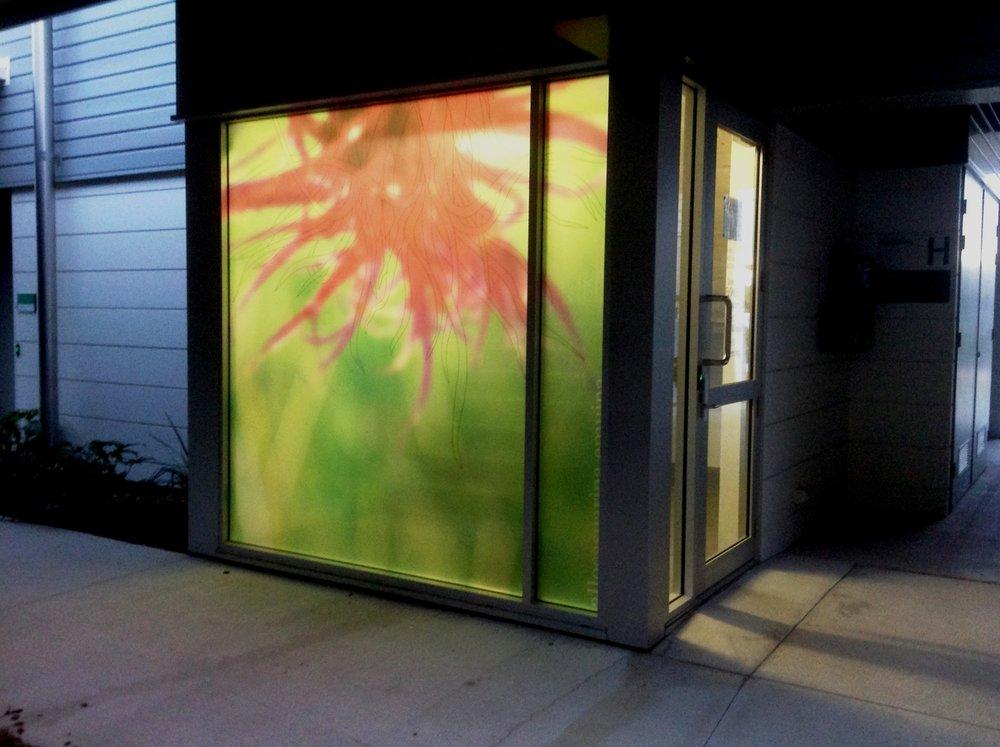 Wallum window Glen Manning.jpg