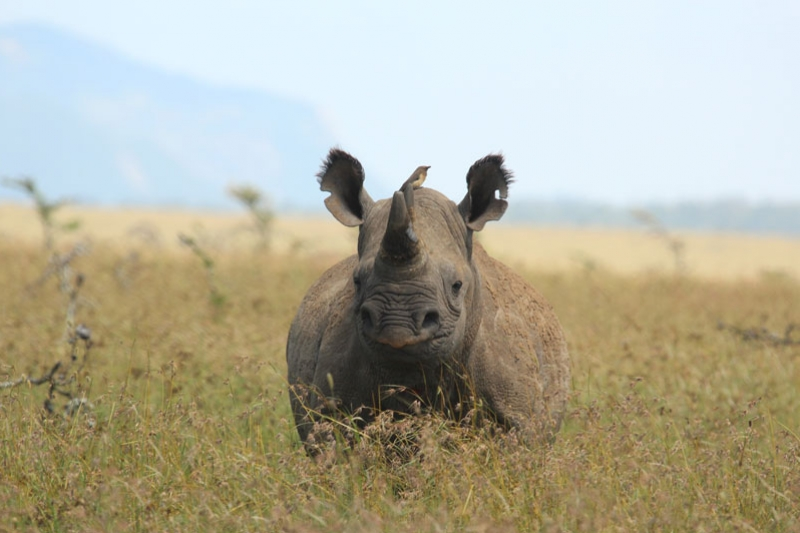 Rhino-3_1.jpg