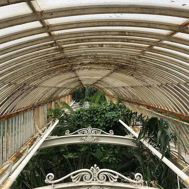 Palm House at Kew Gardens 🌴 #london