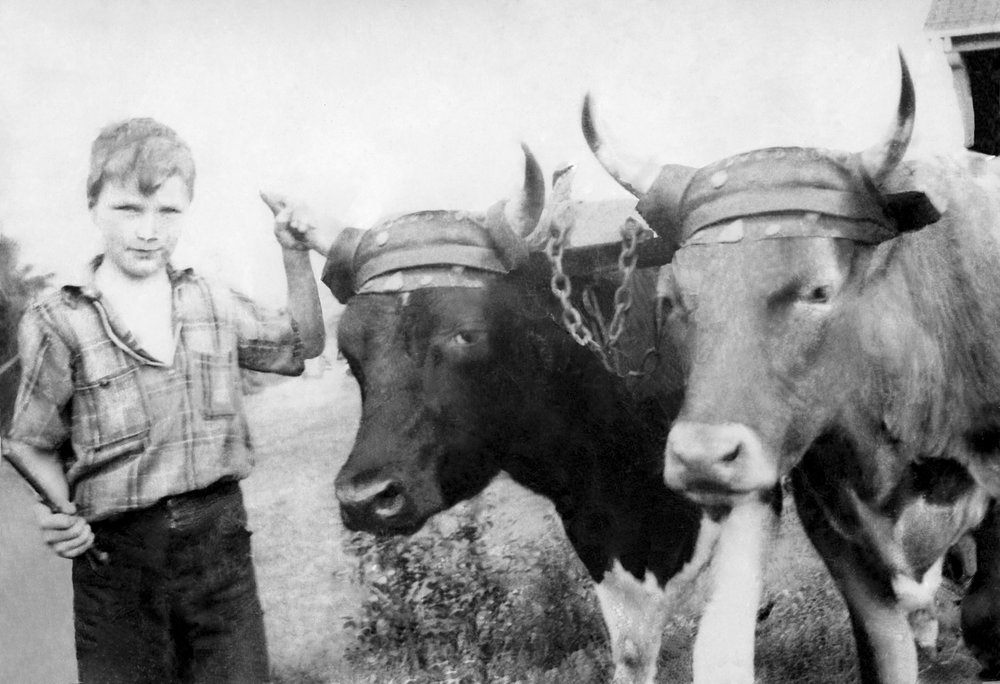 Boy and Cows FOR WEB.JPG
