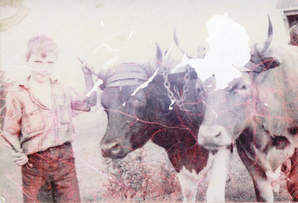 Boy and cows original FOR WEB.jpg