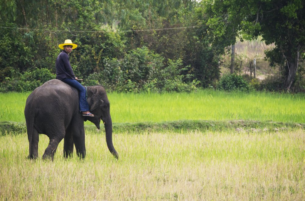 Mahout in Field.jpg