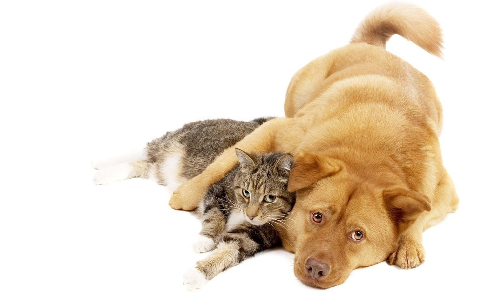 Cats and Dogs picture.jpg