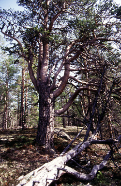 urskog.jpg