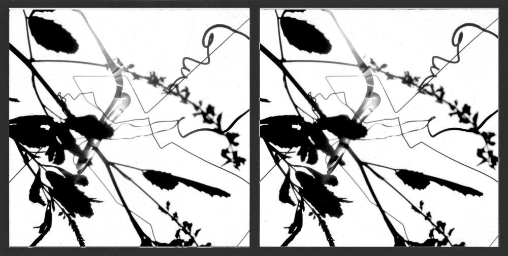 Stereo photogram, 2007.