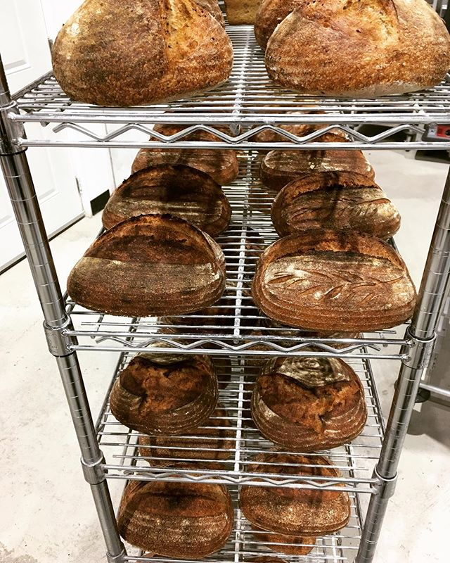 Bread heading to the shelves! Good morning Tofino #haveyousummitedtoday